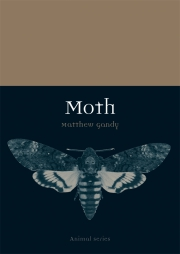 Jacket Image For Moth