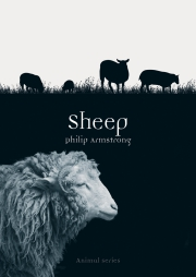 Jacket Image For Sheep