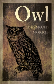Jacket Image For Owl