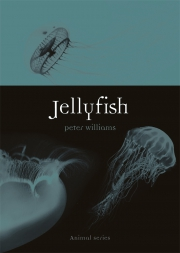 Jacket Image For Jellyfish
