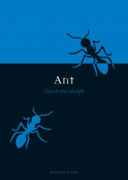 Jacket Image For Ant