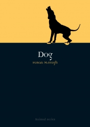 Jacket Image For Dog