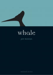 Jacket Image For Whale