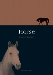 Jacket Image For Horse