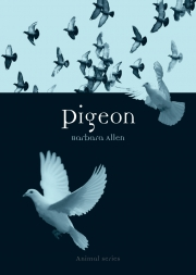 Jacket Image For Pigeon